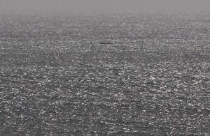 un concurrent (probablement Olivier Montiel N°7) au sud de l'île de la Madeleine vu depuis la côte - Mathieu Morverand